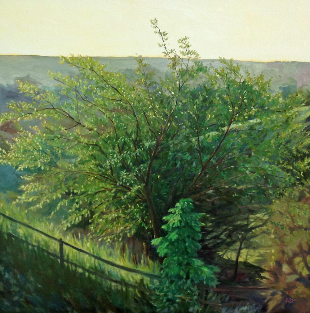 Sunlight on Apple Tree